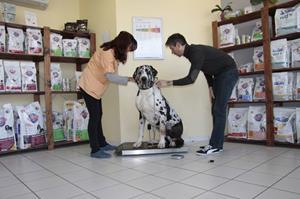 Balance à la clinique vétérinaire akkolytes St André de Cubzac