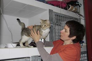 Hospitalisation vétérinaire à la clinique Akkolytes de St André de Cubzac