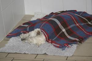Hospitalisation chien