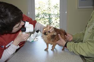 Consultation d'ophtalmologie à la clinique vétérinaire akkolytes de St André de Cubzac
