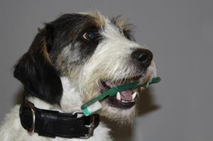 Brossage de dent chien, clinique vétérinaire akkolytes St André de Cubzac